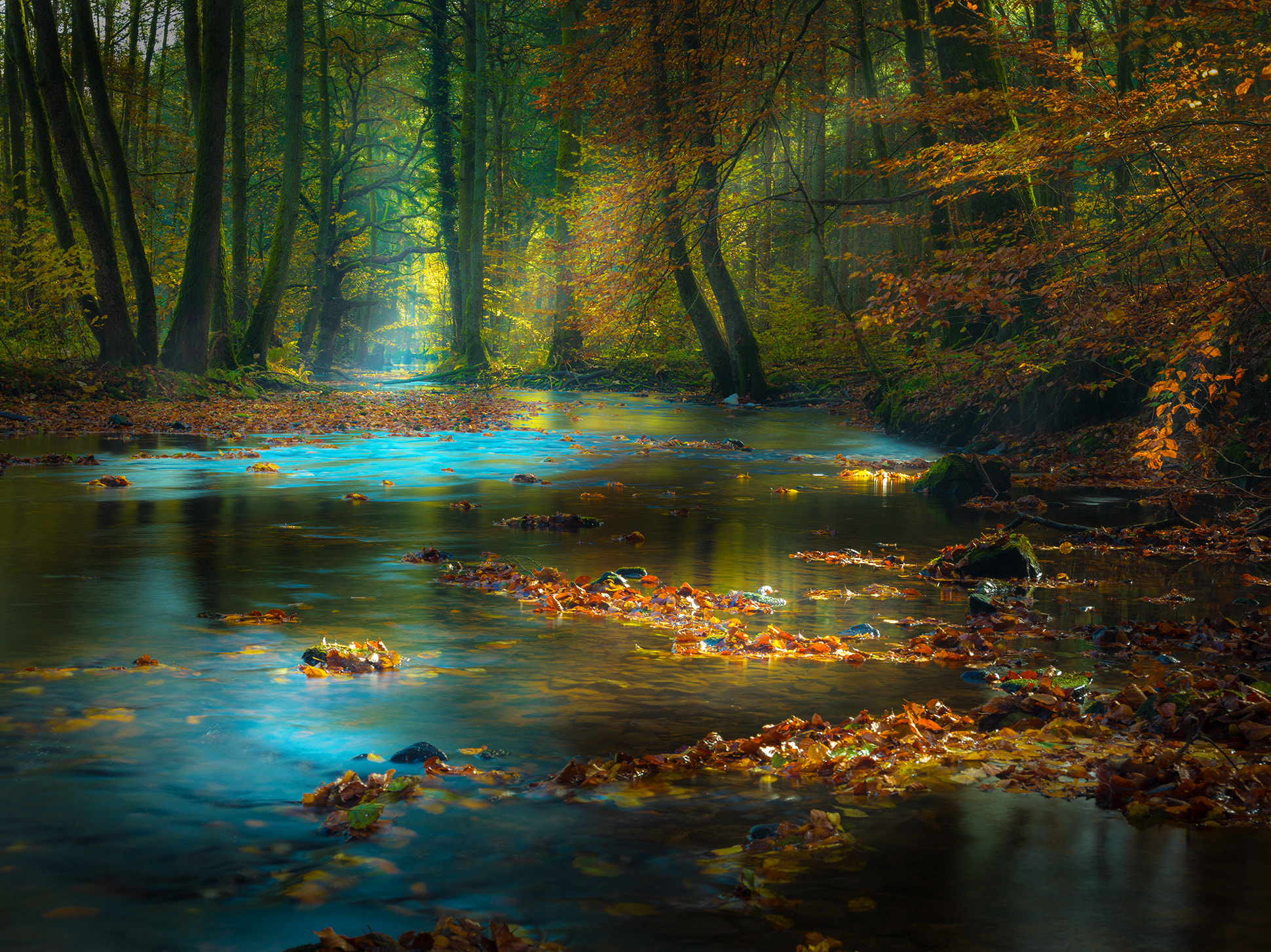 Photograph Magic Light in the Spessart / Germany by Rolf Nachbar on 500px