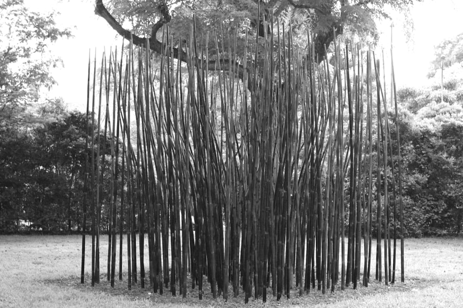 Bamboo-Bonsai-Ing (Black & White)
