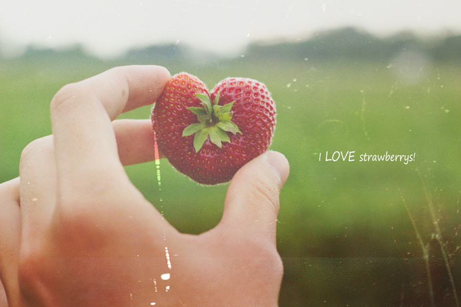 Photograph i LOVE strawberry picking by joel stankiewicz on 500px