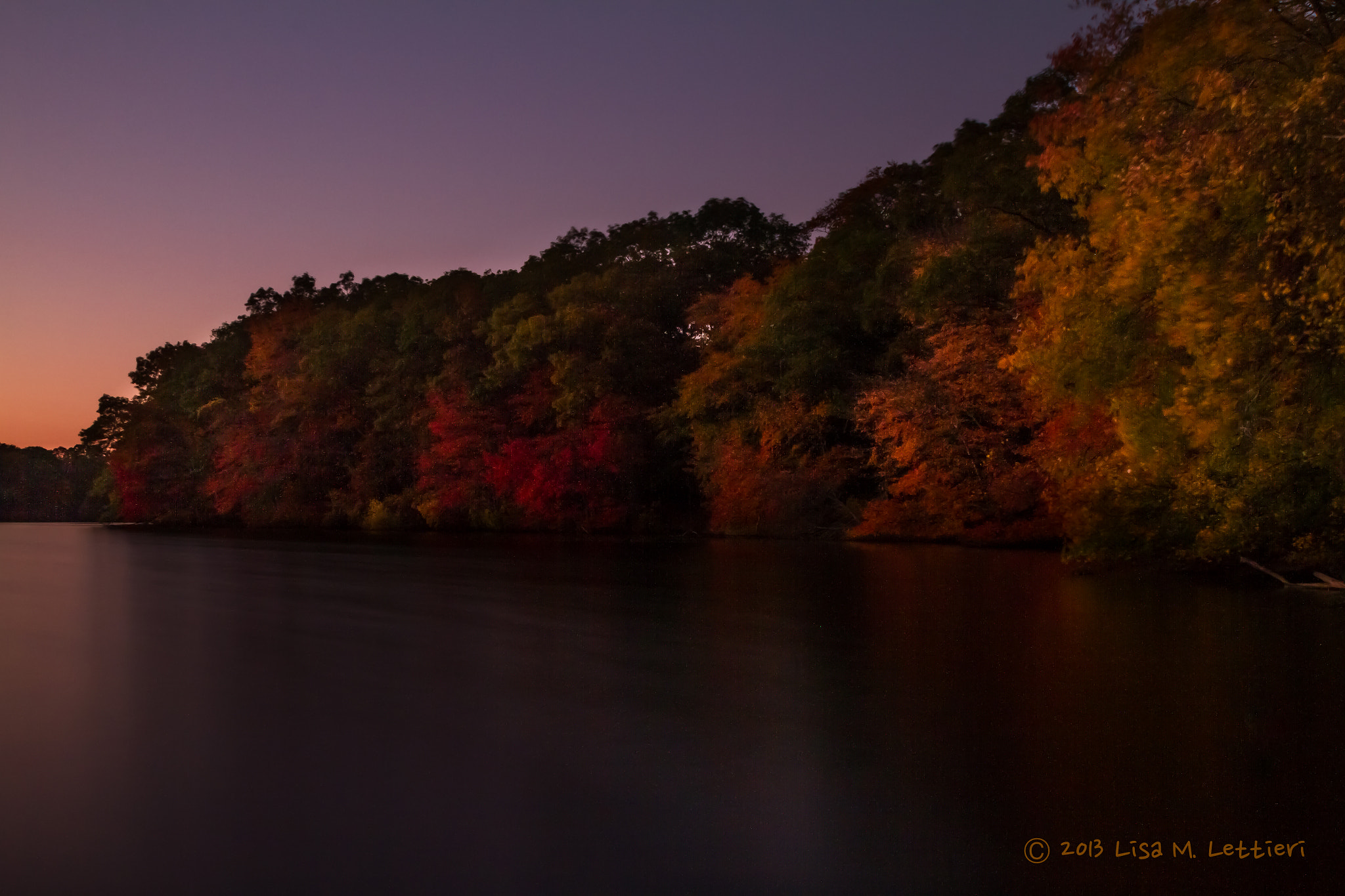 Photograph Foliage at Sunset by Lisa Lettieri on 500px