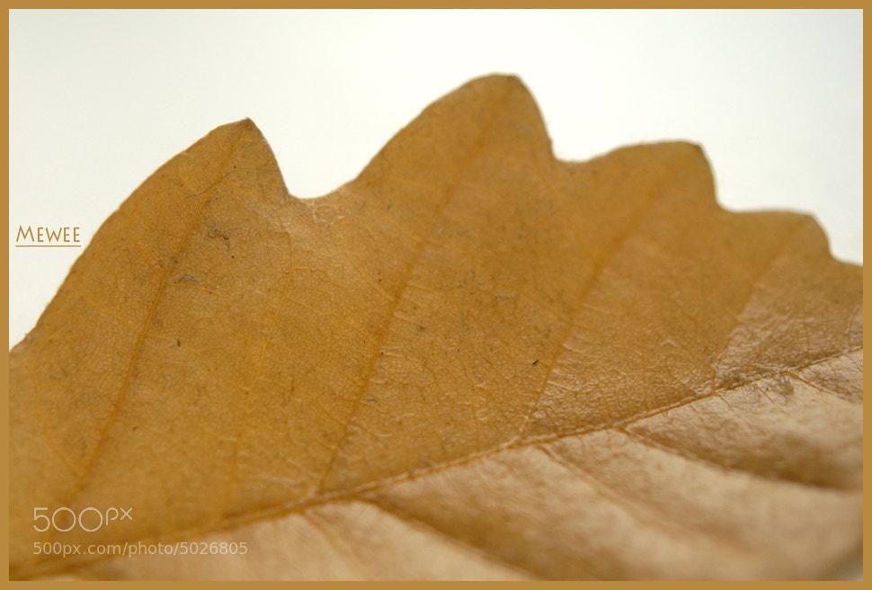 Photograph Oak Leaf by Arkady Rodak on 500px