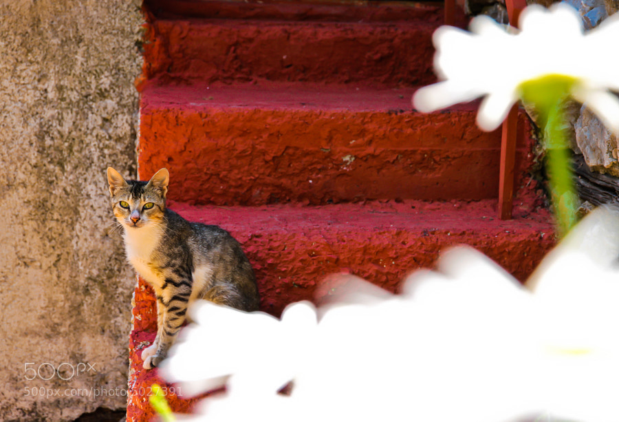 Cat at the steps