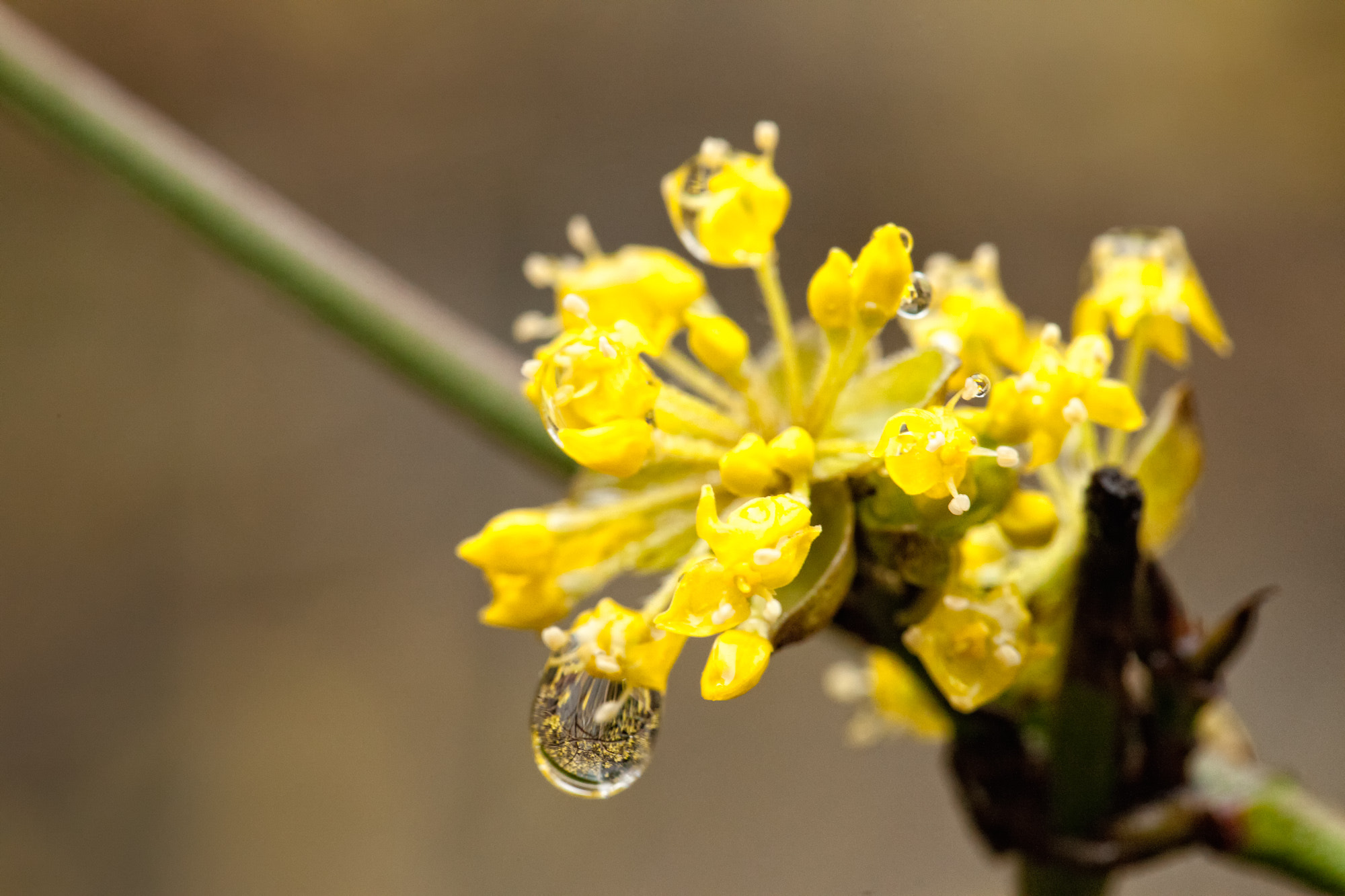 Photograph After the Rain by Joseph Calev on 500px