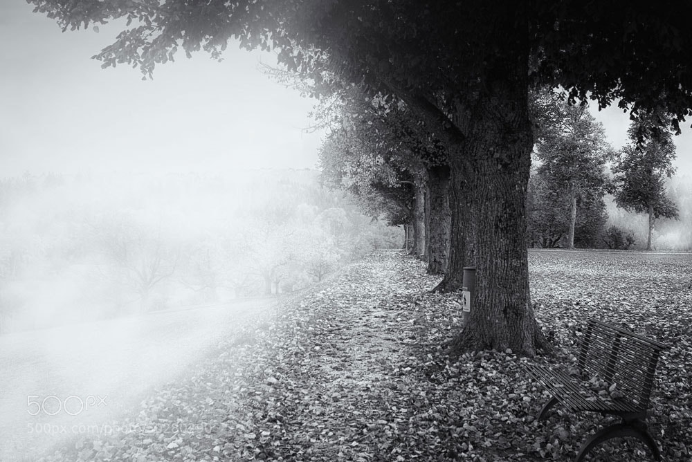Photograph Fog pulls up by Photographix_by_Moni on 500px