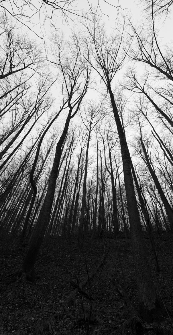 Photograph The Forest for the Trees by Greg Booher on 500px