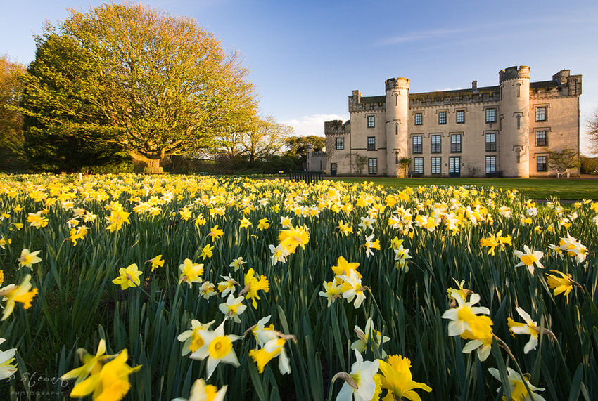 Photograph House of the Daffodils by Philip Stewart on 500px