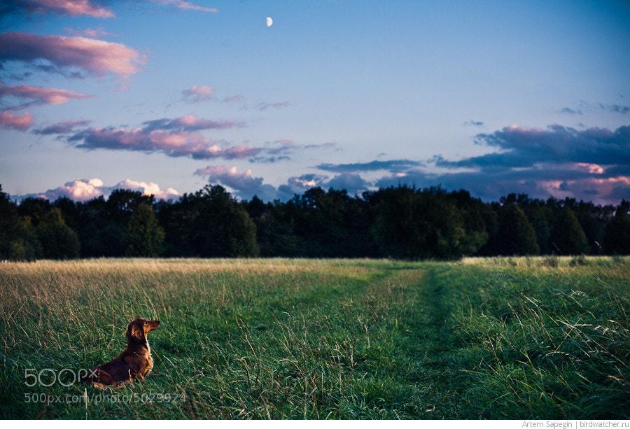 Photograph Twilight Dachshund by Artem Sapegin on 500px