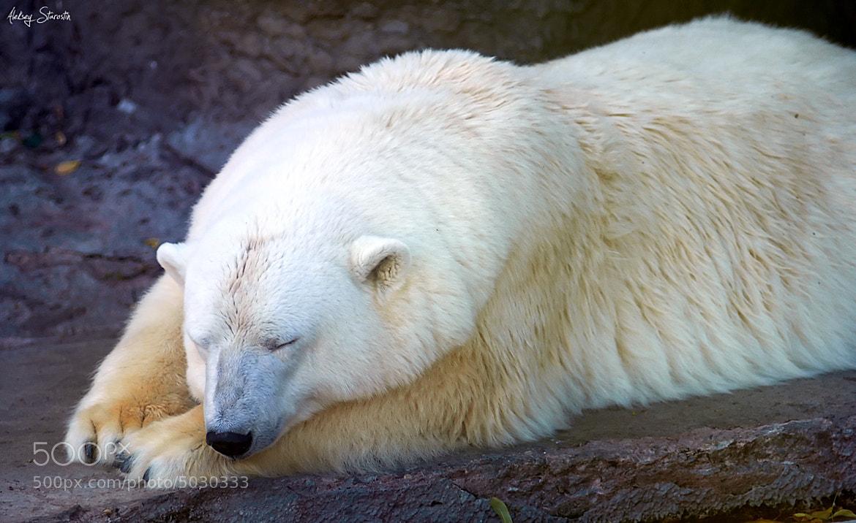 Photograph Coca-Cola bear by Aleksey Starostin on 500px
