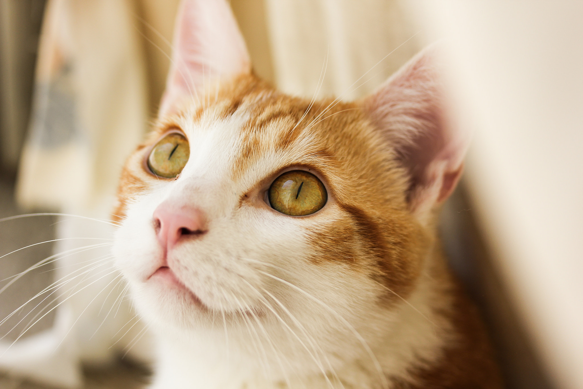 Photograph The Cat Gazes by Stephen Moehle on 500px