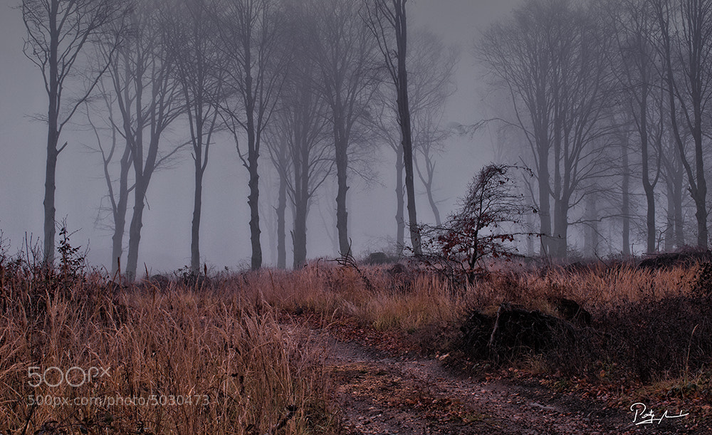Photograph Mystical land by István Ponty on 500px