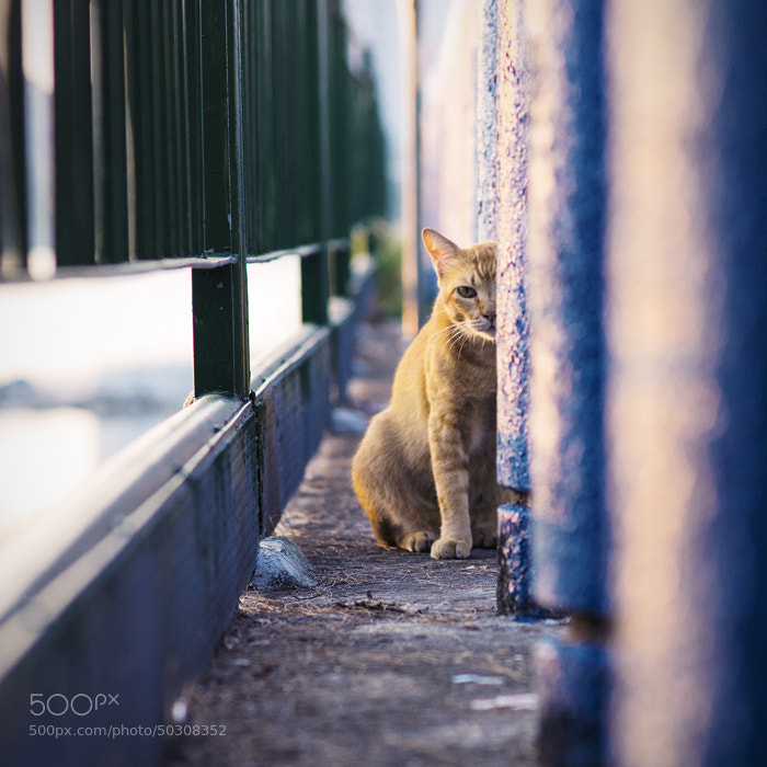 Photograph Lurker by WK Cheoh on 500px
