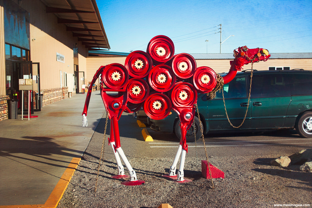 Photograph Valentines camel by Maximus Gaia on 500px