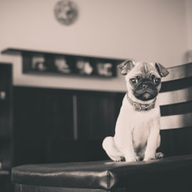Alien Dog by Gabriel Aszalos (gabrielaszalos)) on 500px.com