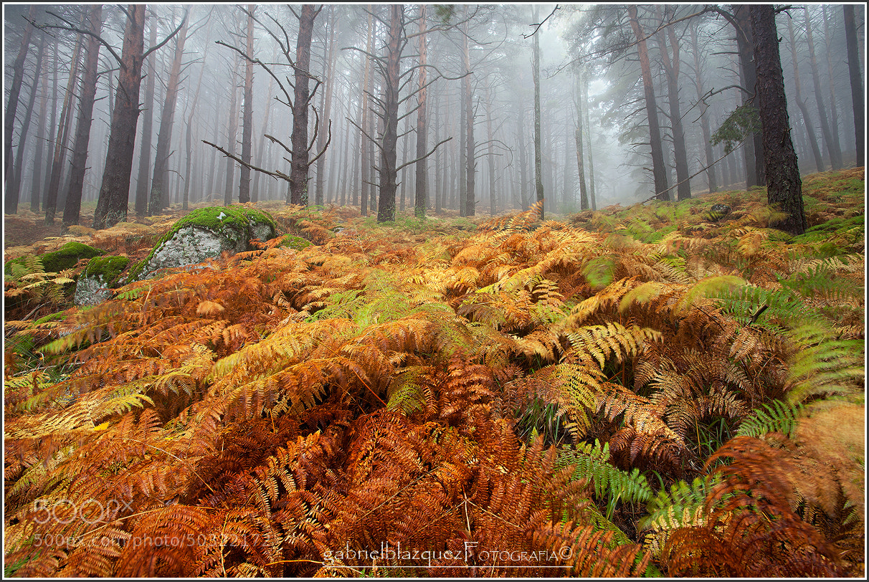 "Photograph ""Fantasy"" by Gabriel Blazquez  on 500px"