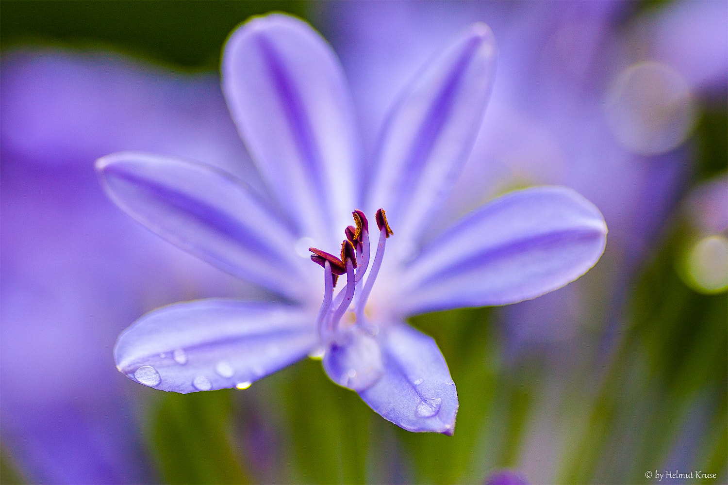 Photograph Flower details by Helmut Kruse on 500px