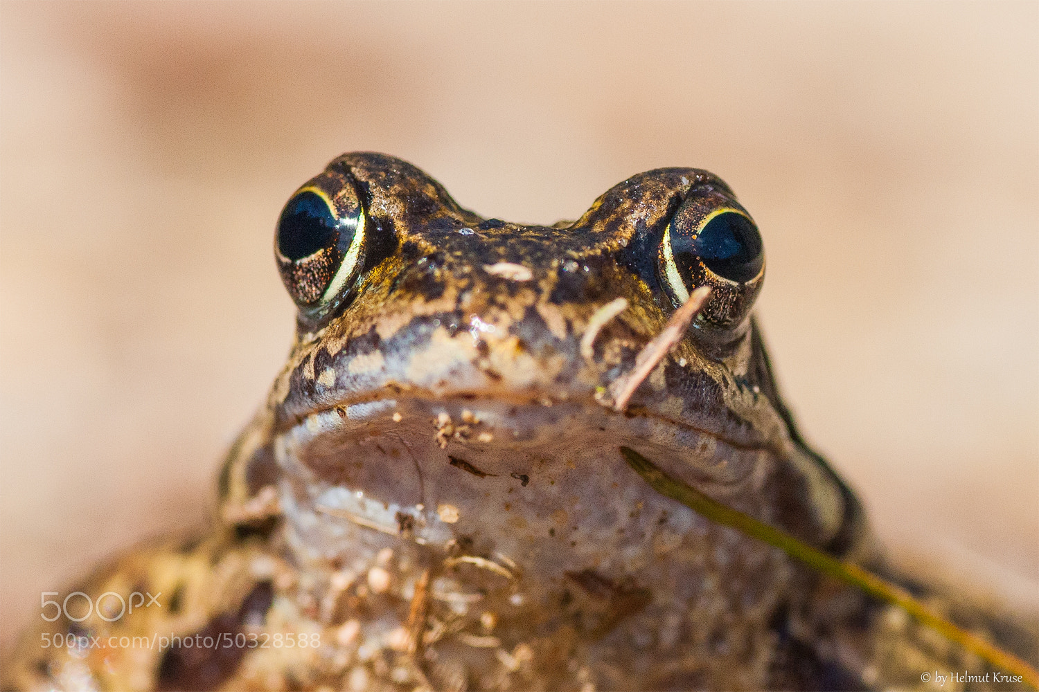 Photograph I am watching you by Helmut Kruse on 500px