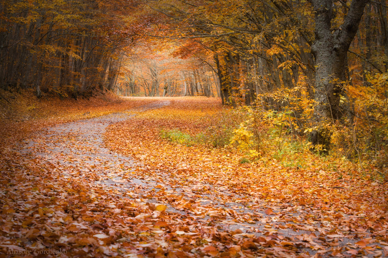 Photograph Road to fall by Anatoly Gordienko on 500px
