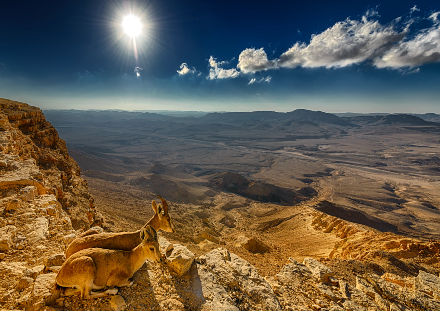 Desert Morning by Ido Meirovich on 500px.com