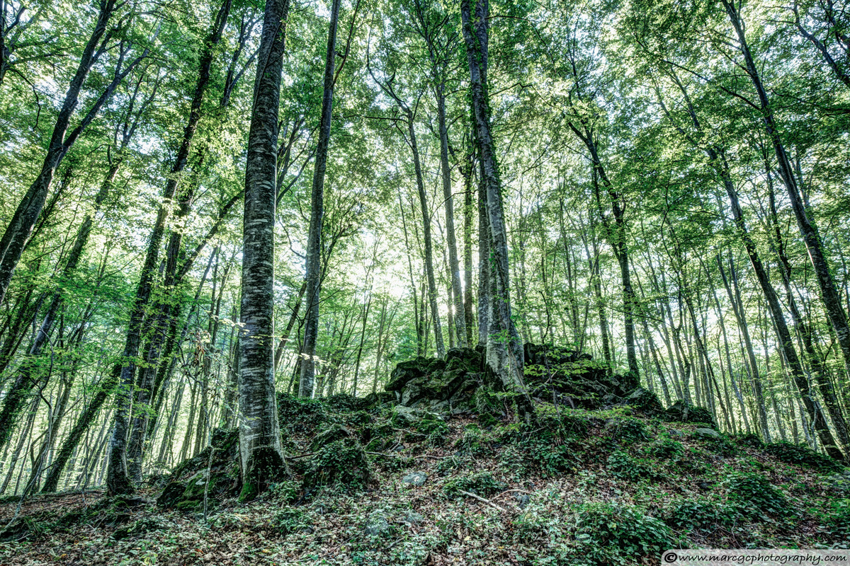 Photograph The Jordan's beech wood, Catalonia by Marc Garrido on 500px