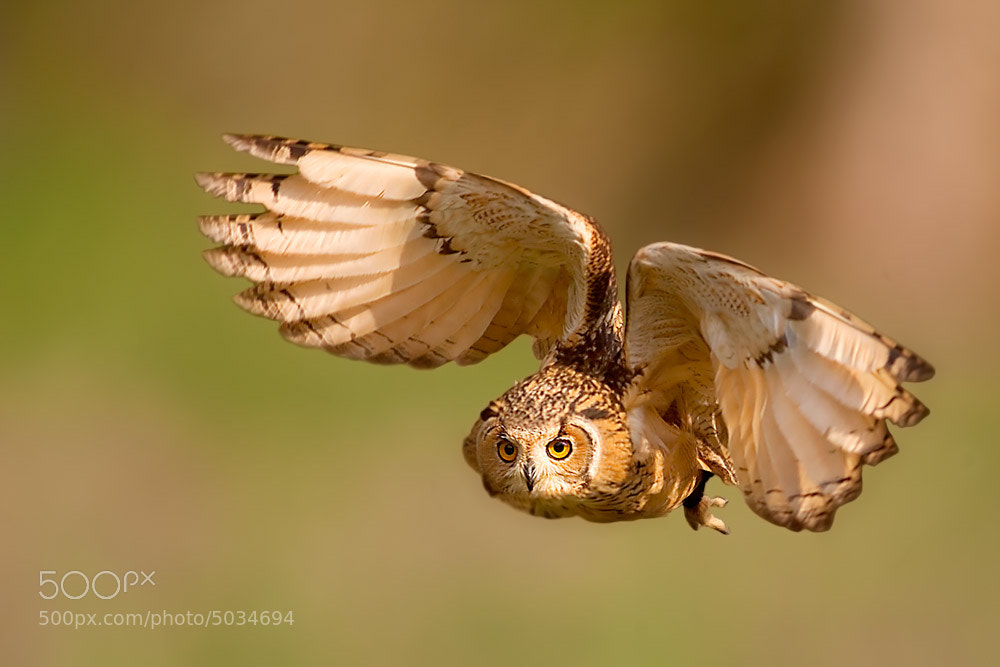 Photograph owls by Stefano Ronchi on 500px