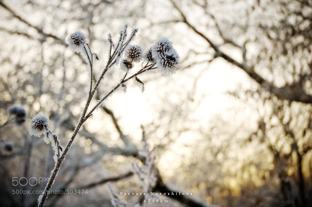 Photograph Winter by Varvara Novozhilova on 500px
