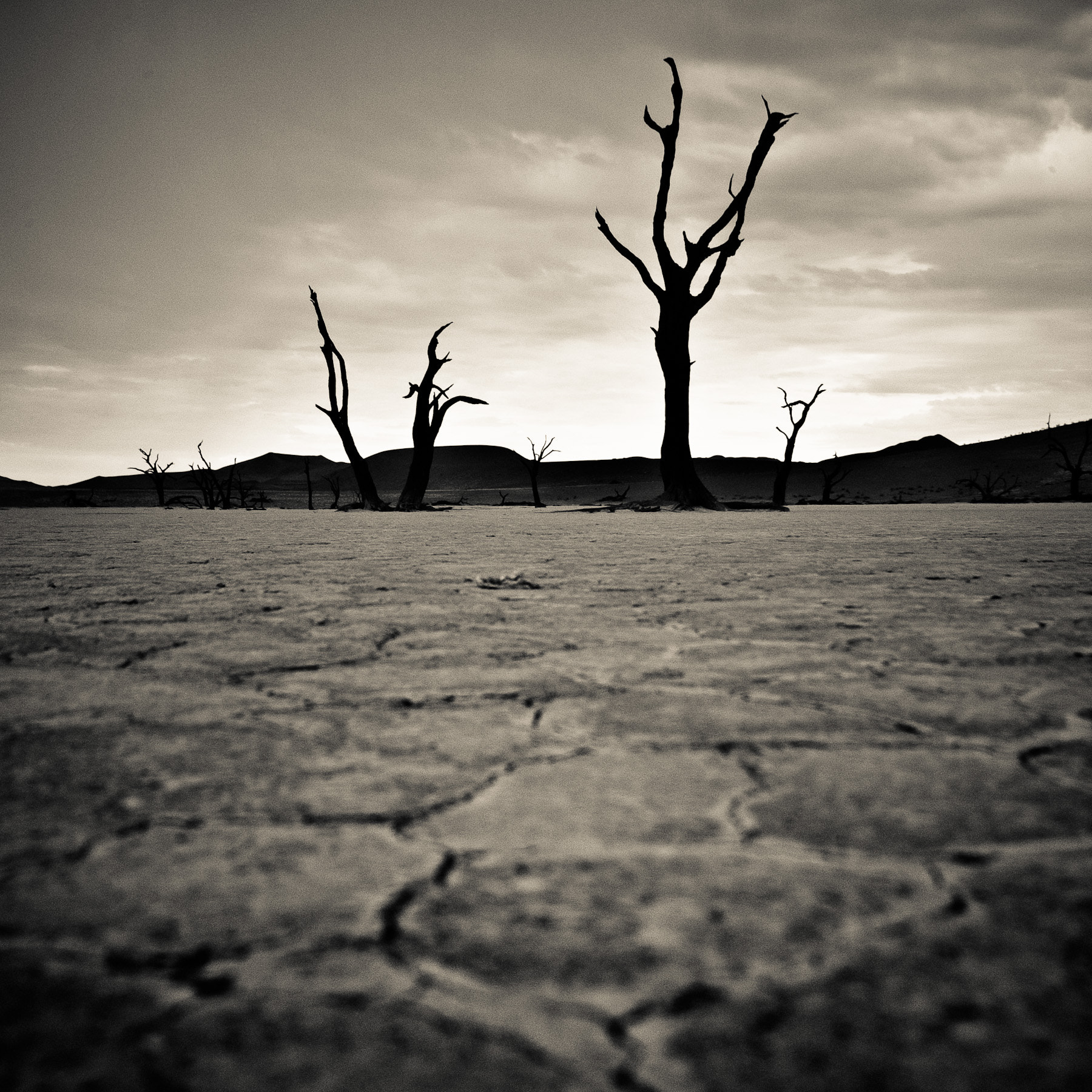 Photograph Dry by Gorazd Golob on 500px