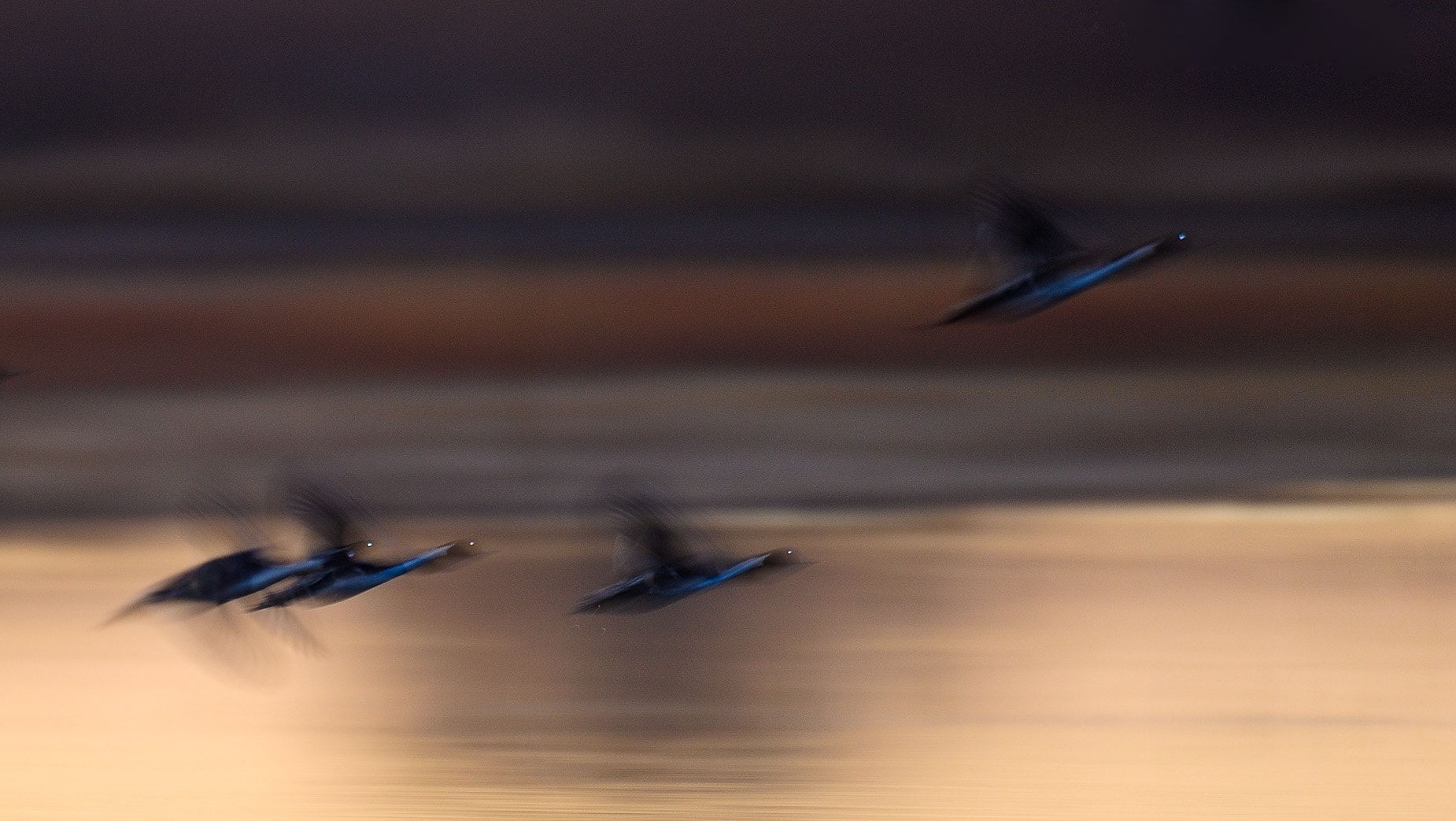 Photograph Electric geese by Gorazd Golob on 500px