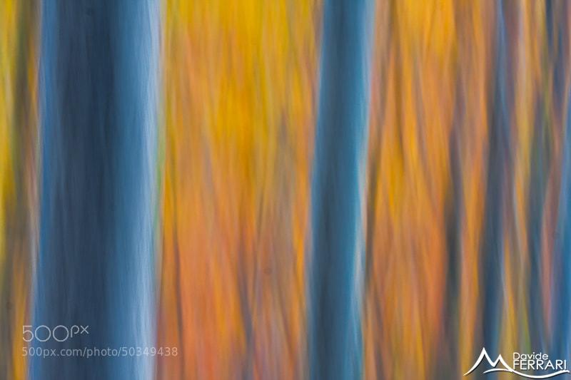Photograph Autumn Palette by Davide Ferrari on 500px