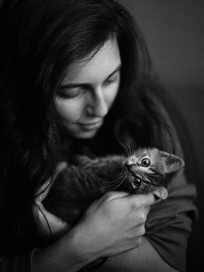 Photograph Cats ) by alexander kan on 500px
