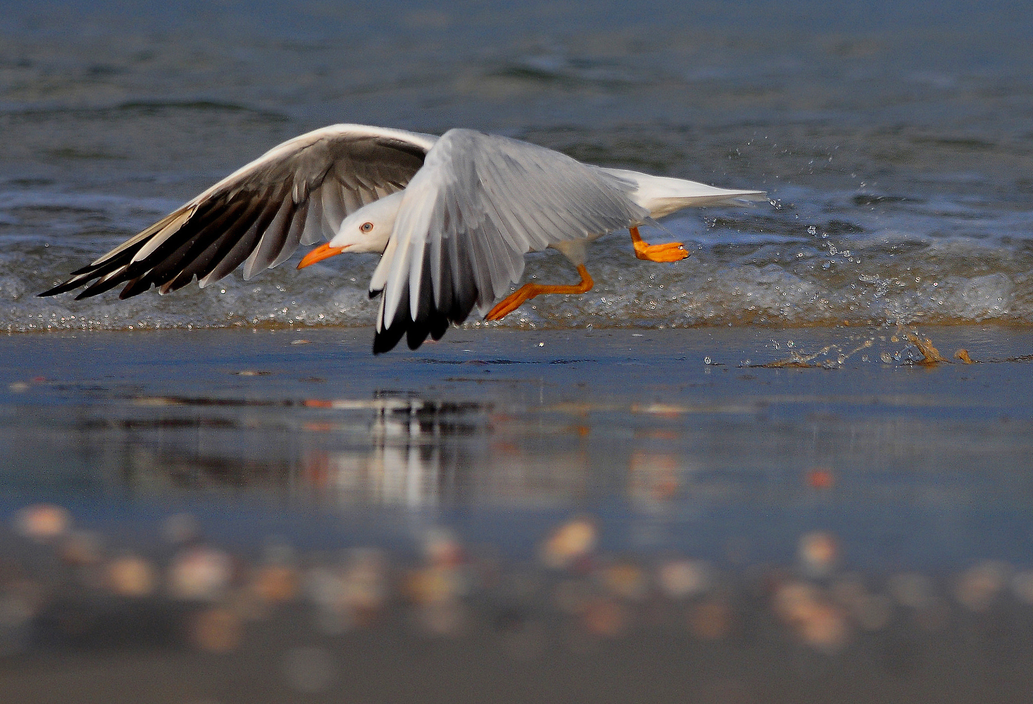 Photograph Low speed by dorit chaimovski on 500px