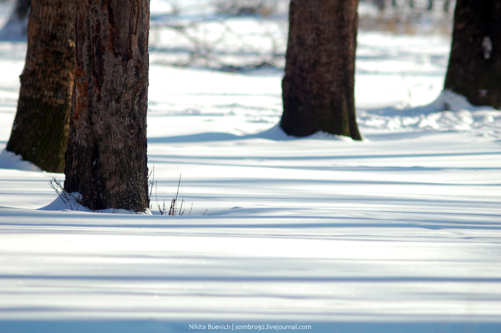 Photograph Winter stripes by Nikita Buevich on 500px