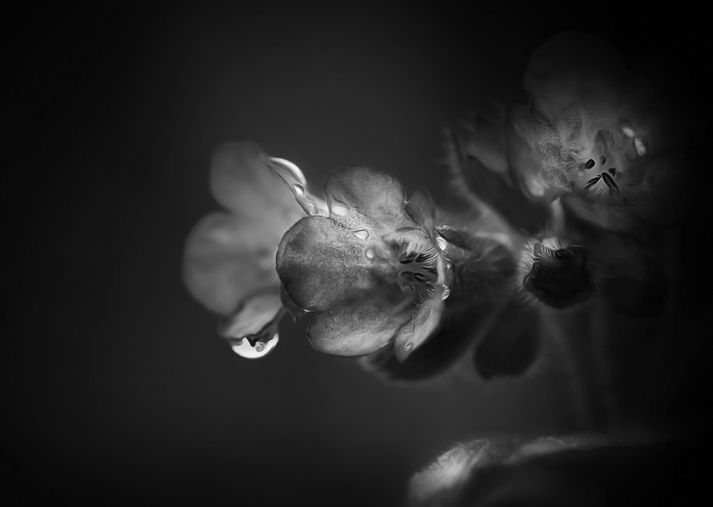 Photograph Fears and tears .. by Terje Nicolaysen on 500px
