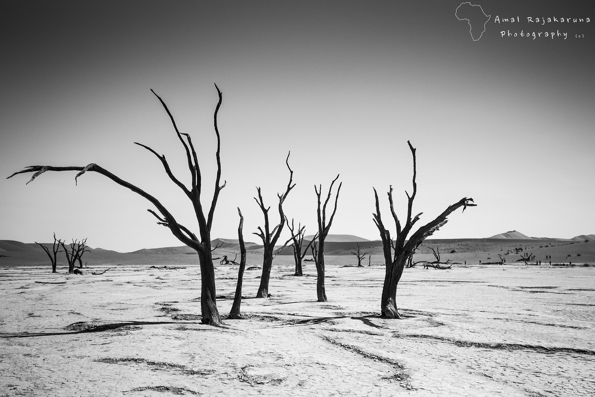 Photograph Deadvlei Trees, Namibia by Amal Rajakaruna on 500px