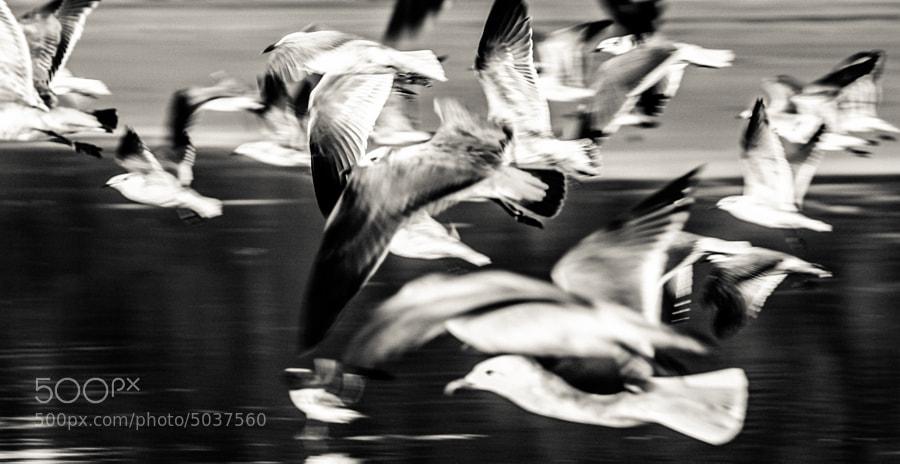 Seagulls in flight by carlos restrepo (carlosrestrepo)) on 500px.com