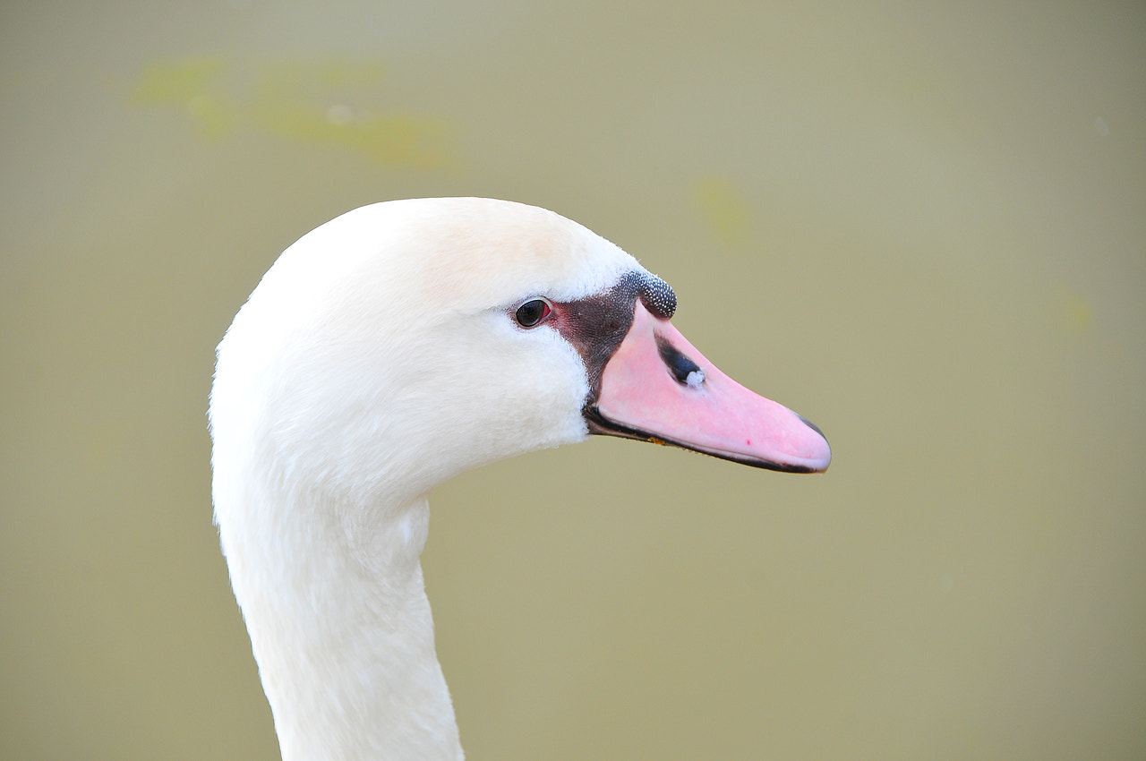 Photograph Close by Imad Ammor on 500px