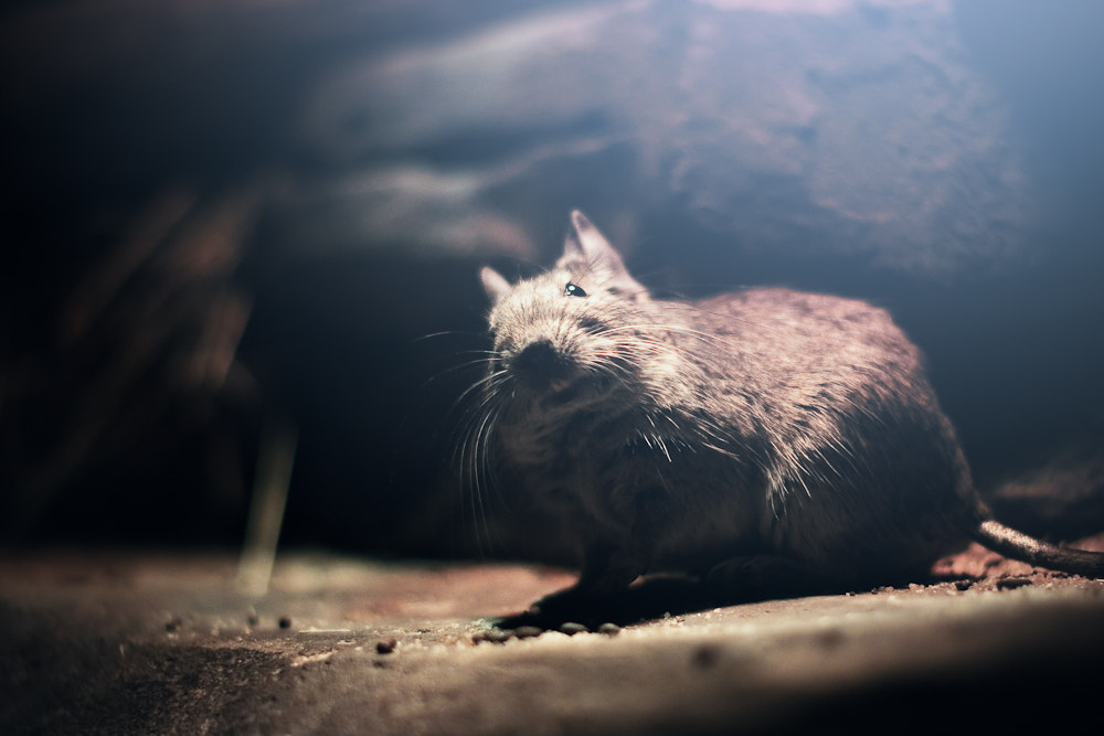 Photograph mouse by Vitaly Zimarin on 500px