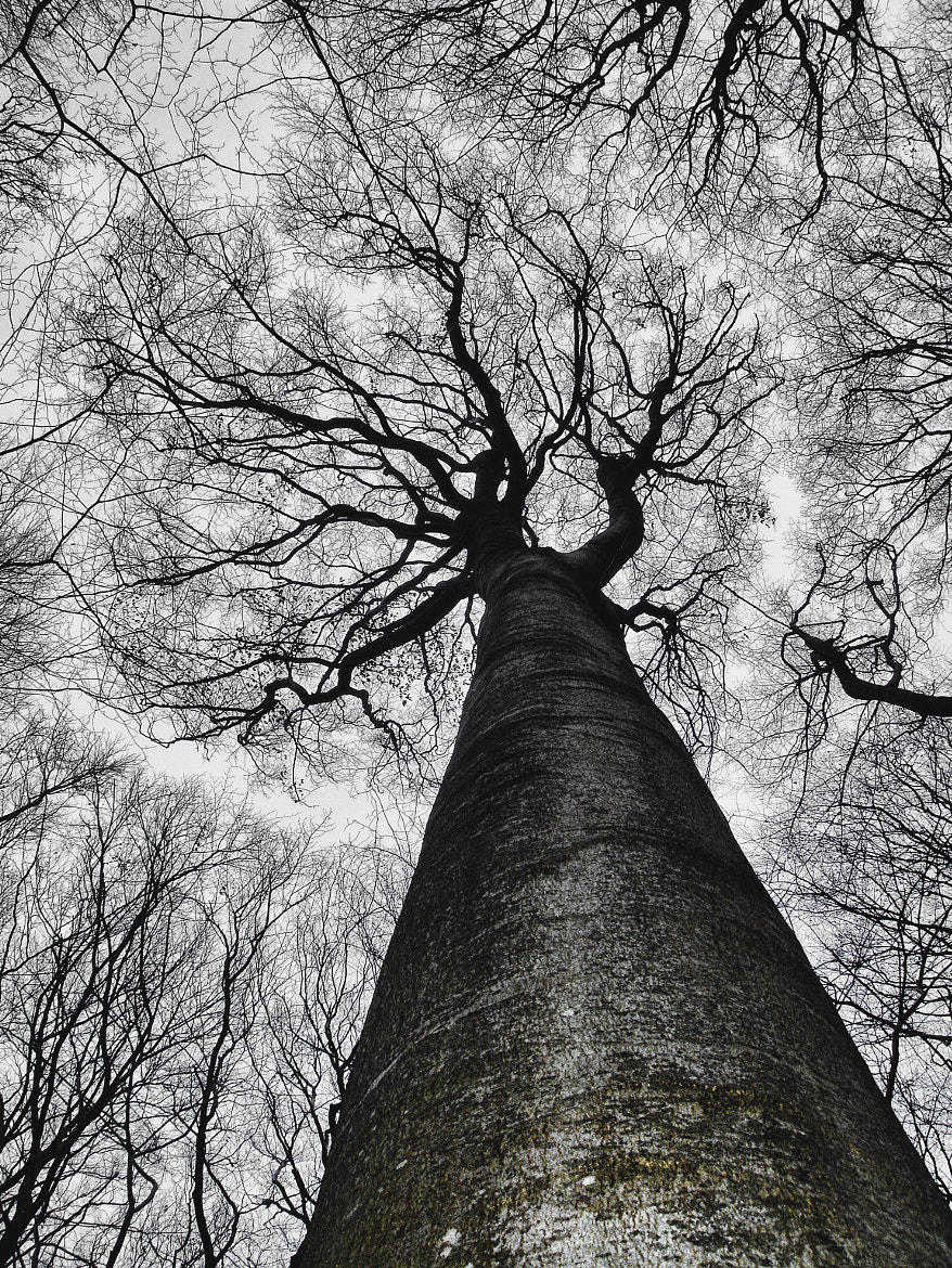 Photograph Tree crown by Marco Møller on 500px