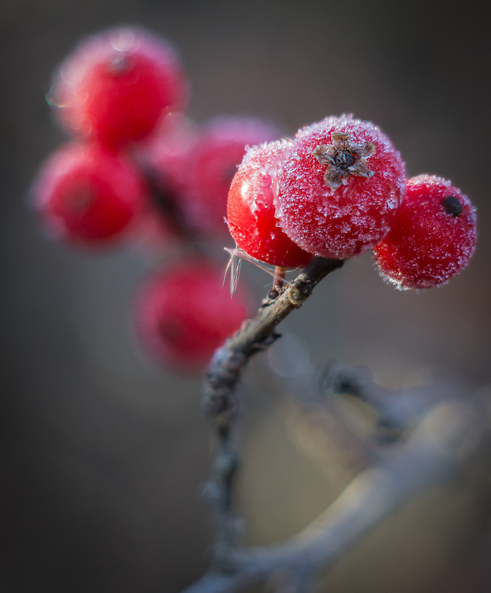 Photograph Autumn Frost by Stevan Tontich on 500px