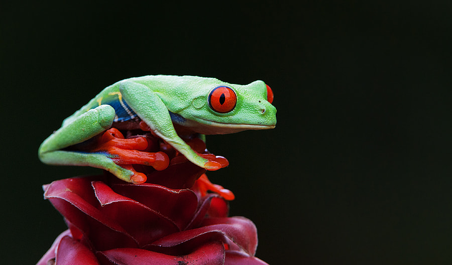 Photograph Red Eye by Aubrey Stoll on 500px