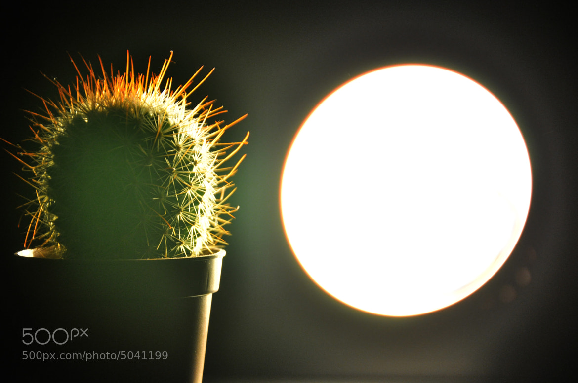 Photograph Cactus (2) by Çağatay Derin on 500px