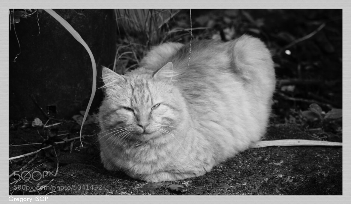 Photograph Garfield by ISOP Greg on 500px