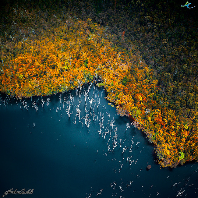 Photograph Colours above the forest by Jordan  Cantelo on 500px