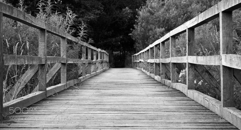 Photograph boardwalk by Thomas Jäger on 500px