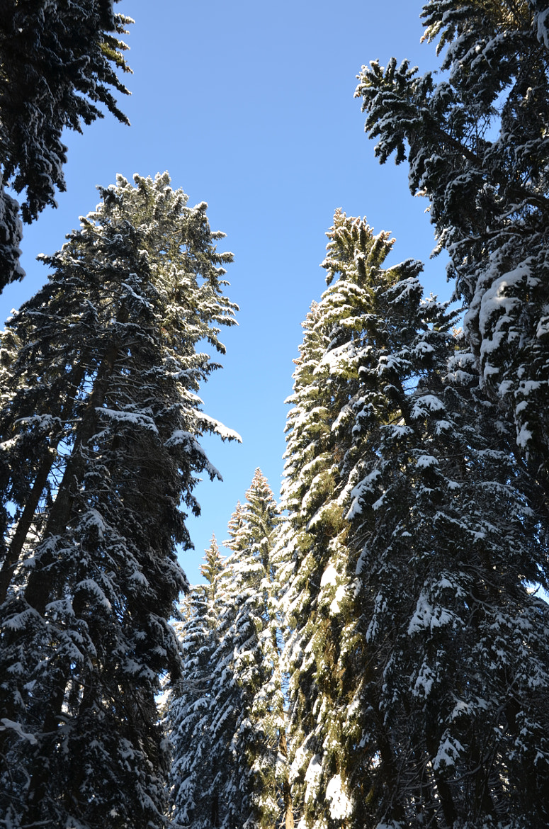 Photograph Snow on Trees by Flavius-Gaina on 500px