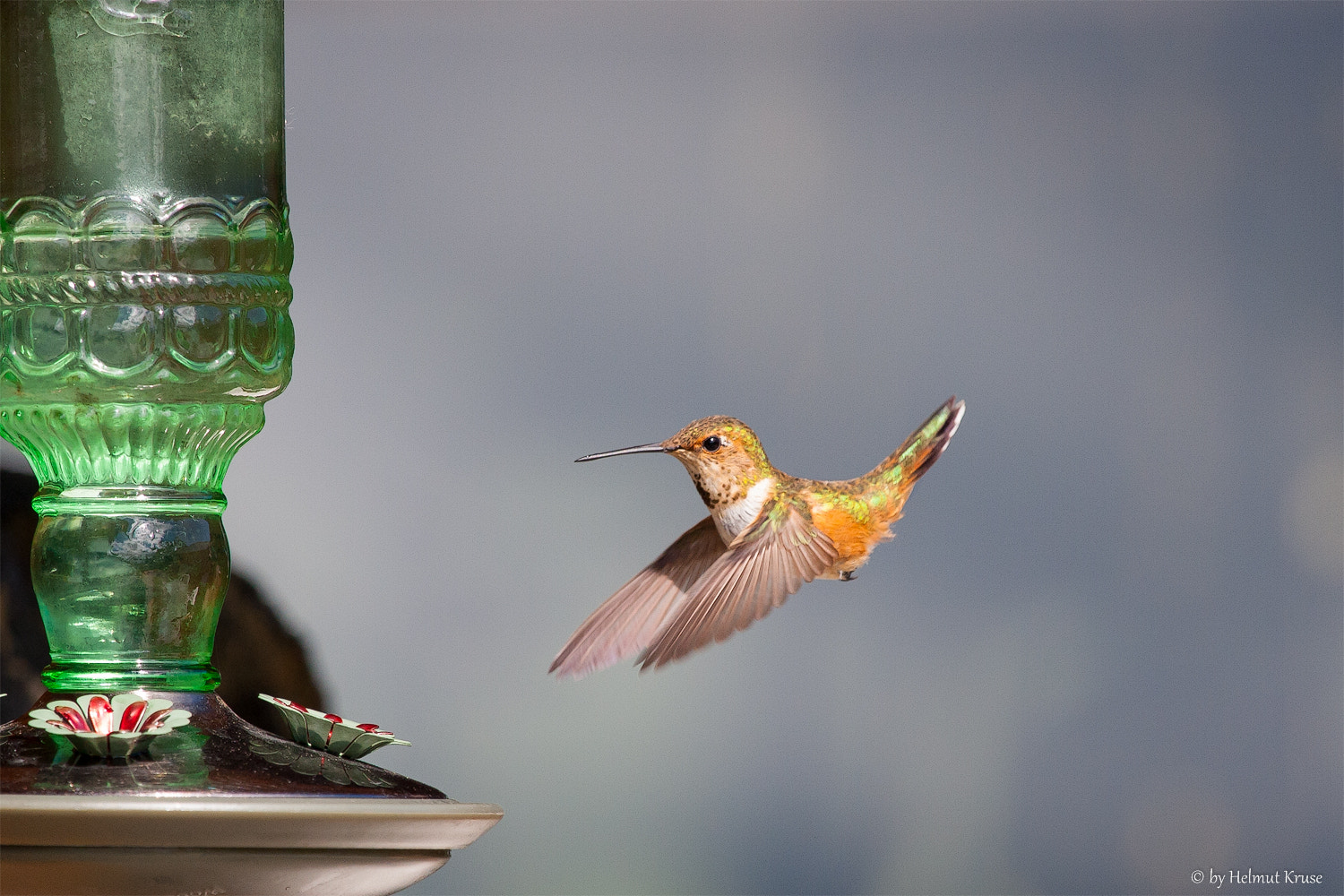Photograph A Hummingbirds in front of a feeder, Canada by Helmut Kruse on 500px