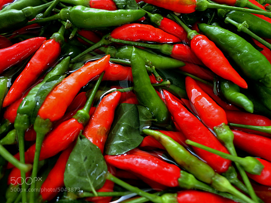 Photograph Peppers/Pimentas by Ana Caúla on 500px
