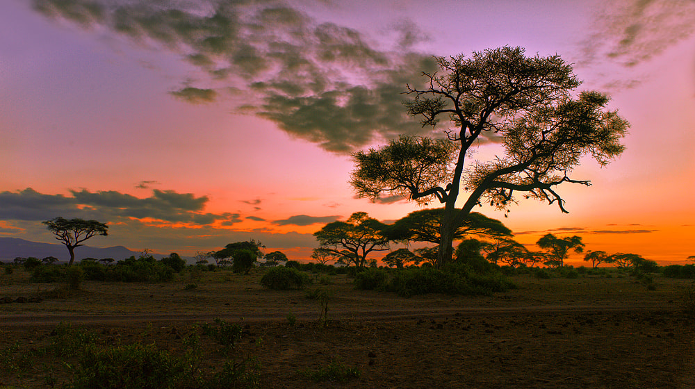 Photograph The Light of Amboseli by Aubrey Stoll on 500px