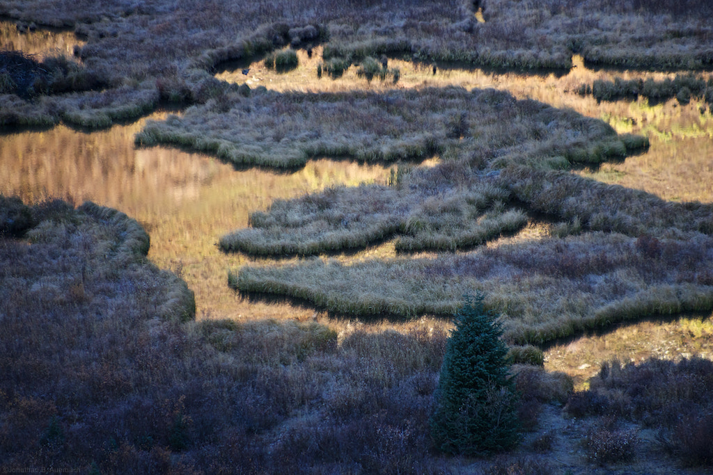 Photograph Beaver Pond reflections by Jonathan Auerbach on 500px
