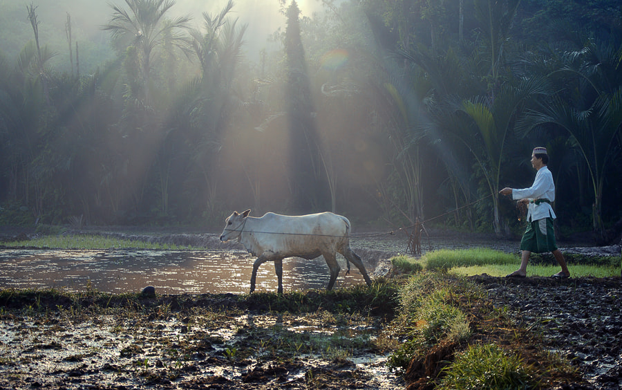 Photograph Me & My Cow by adib muhandis on 500px