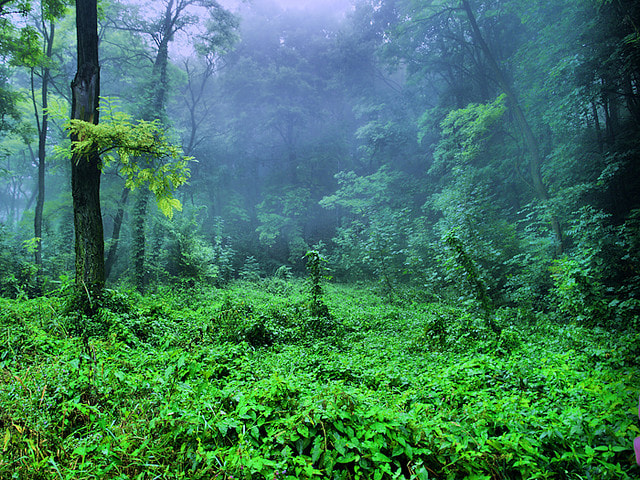 Photograph Morning in forest by Dmytro Doskoch on 500px
